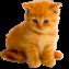 8 августа - День кошки!