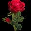 С праздником Книги и розы