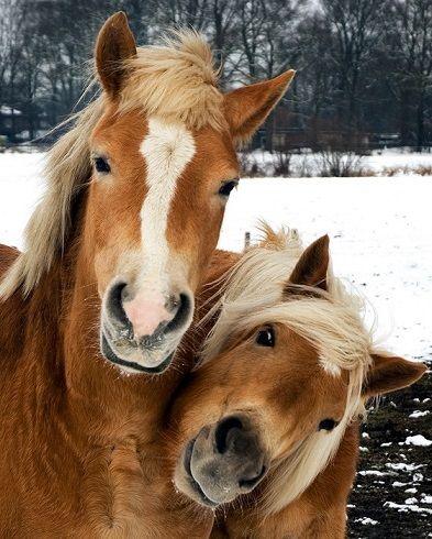 Обложка произведения 'Каждый из нас по-своему лошадь... - ЗАВЕРШЁННЫЙ ЛОНГМОБ'