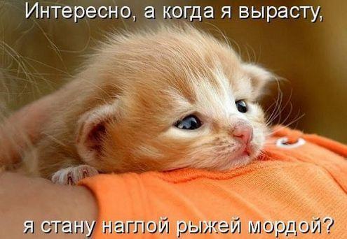 Обложка произведения 'Исповедь кошки(скетч)'