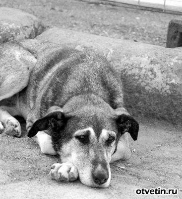 Обложка произведения 'Жизнь собачья'