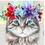 Организатору кошачьего флешмоба