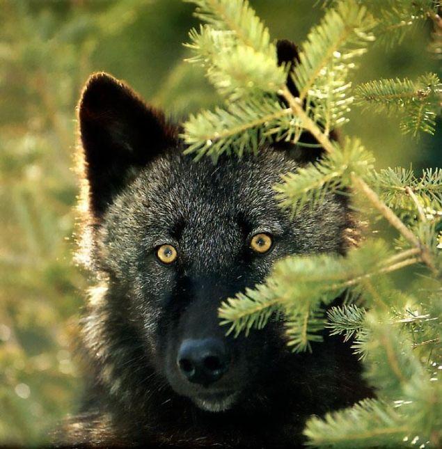 Обложка произведения 'Волчонок'