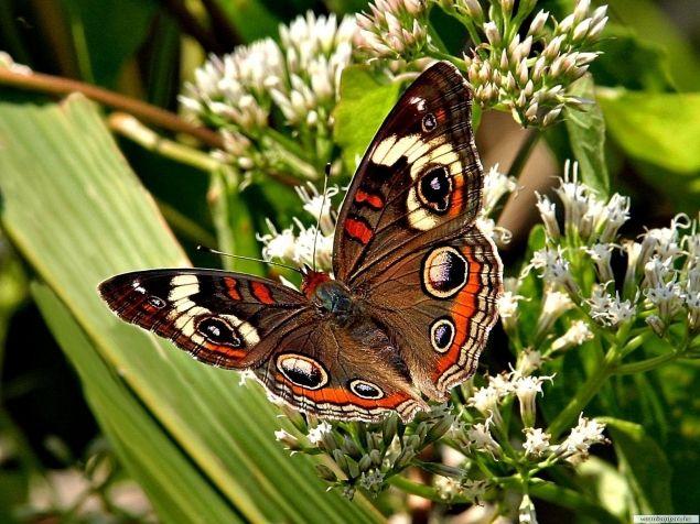 Обложка произведения 'Бабочка на полянке'