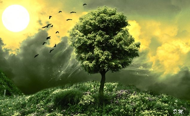Обложка произведения 'Дерево'