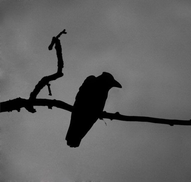 Обложка произведения 'Смерть Чёрноро ворона'