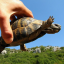 летящая черепаха