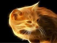 Обложка произведения 'Песочный Кот'