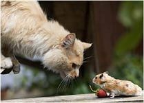 """Обложка произведения '""""Кошки-мышки.""""'"""