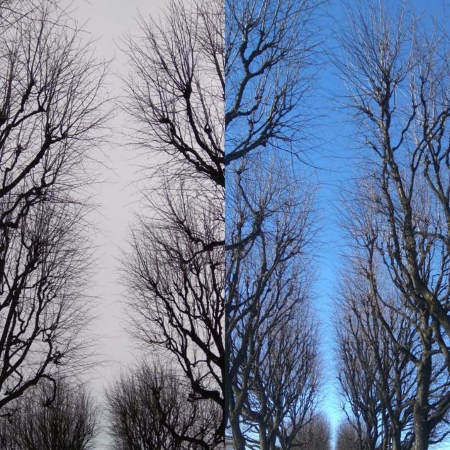 Обложка произведения 'Две фотографии...'
