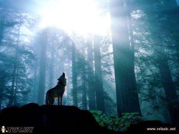 Обложка произведения 'Волки'