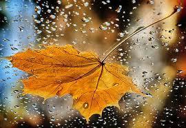 Обложка произведения 'Солнце играло на листьях...'