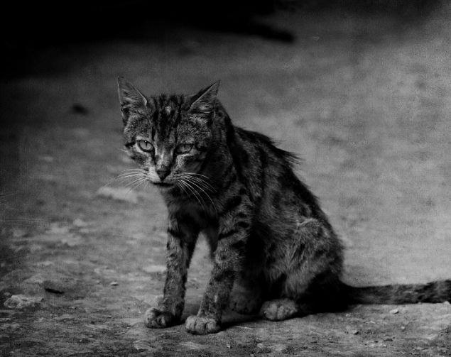 Обложка произведения 'Кот'