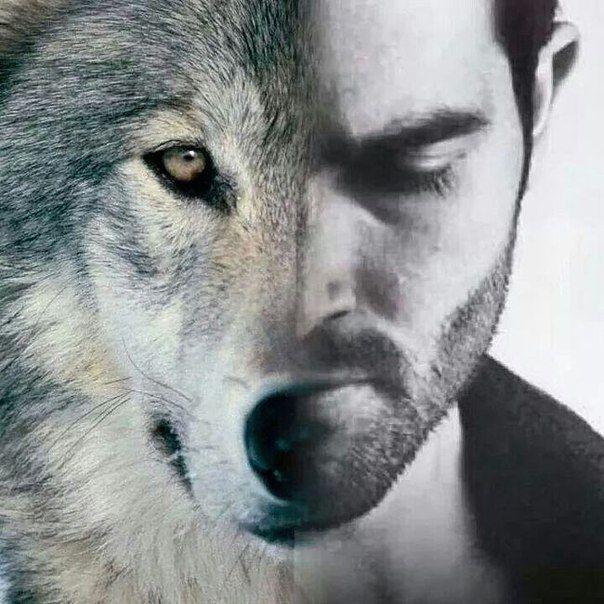 Обложка произведения 'В каждом волке'