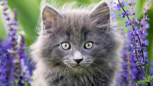 Обложка произведения 'Девятая жизнь кота Савелия'