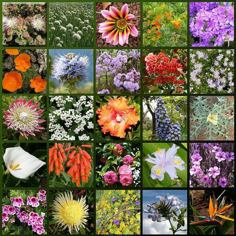 Названия живых цветов с картинками