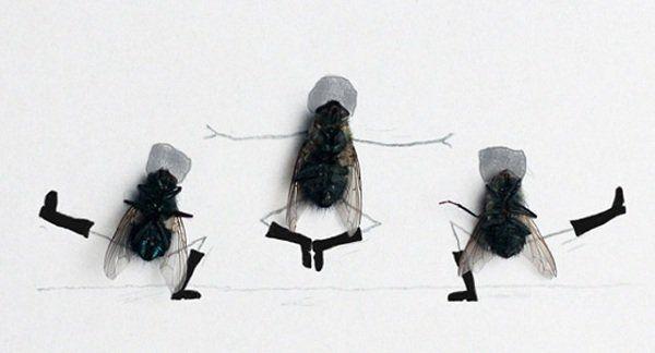 Обложка произведения 'Из жизни мух'