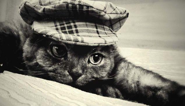 Обложка произведения 'Кошачья разбойничья'