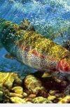 Обложка Благая весть из чрева священной рыбы Моцс