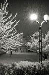 Обложка Песни снега
