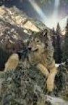 Обложка Шкуры утащили волки…