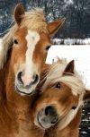 Обложка Каждый из нас по-своему лошадь... - ЗАВЕРШЁННЫЙ ЛОНГМОБ