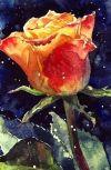 Обложка Первая роза