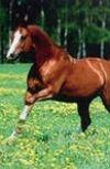 Обложка Мужик и лошадь