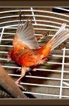Обложка Птица