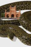 Обложка Репортаж с «петлёй анаконды» на шее