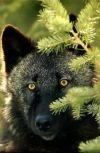 Обложка Волчонок