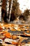 """Обложка """"Тихая осень,поздняя осень"""""""
