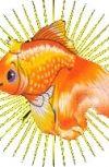 Обложка Сказ о том, как не стоит общаться с Золотой Рыбкой