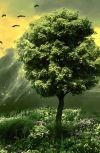 Обложка Дерево