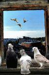 Обложка Смотрю на город... Из рубрики «Петроградские хайку»