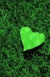 Обложка Ему снились зелёные сны