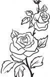 Обложка Розы и мимозы.