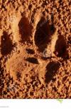 Обложка Прайд. Книга 2. Пыль под ногами