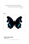 Обложка Black_butterfly