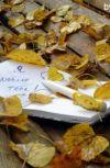 Обложка Осенний блюз