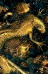 Обложка Золото