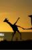 """№ 12 Грон Ксения / Сессия #4. Семинар октября """"РЕЗОНАТОР, или НА ОДНОЙ ВОЛНЕ"""" / Клуб романистов"""