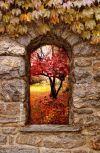 Обложка Окно в осень