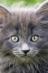 Девятая жизнь кота Савелия / Elf_li Елена