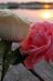 """В ритме музыки души / Лонгмоб """"Love is all"""" ( В ритме музыки души) / Лещева Елена"""