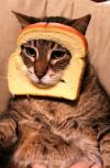 Обложка Дух кота