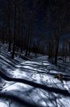 Обложка Мяльтинский лес
