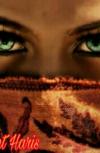 Обложка Египетская ночь