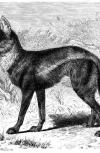 Обложка Охота на шакала