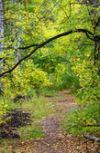 Обложка Осень